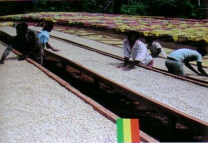 In Sidamo werden Pergaminos auf speziellen Pritschen getrocknet