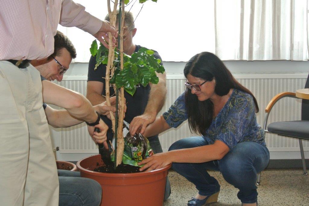auch die PFLEGE der Kaffeepflanze wird von Prof.Edelbauer vorgetragen